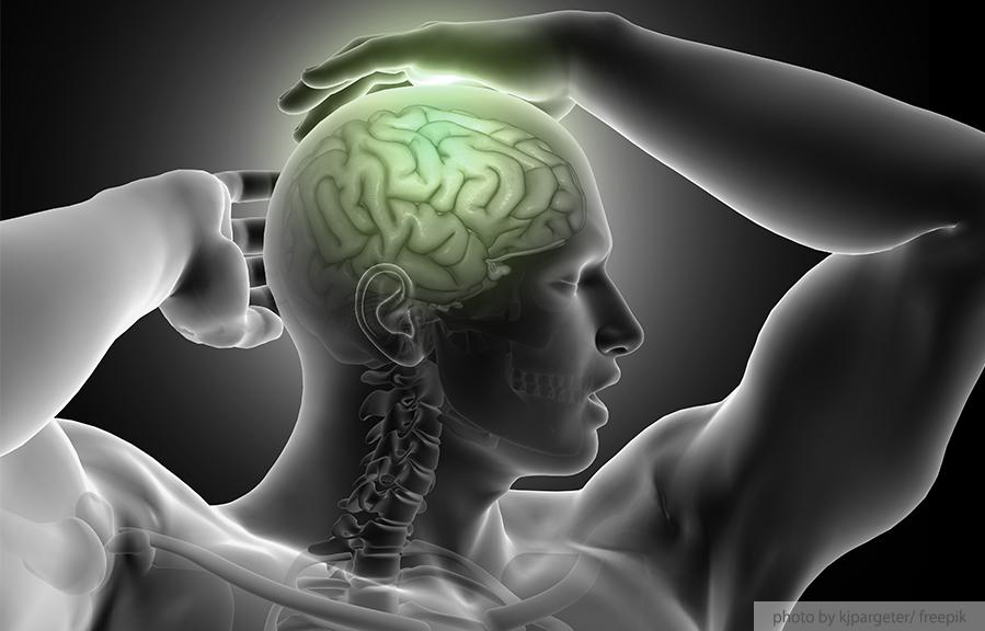 Hibiscus Chiro Blog brain health